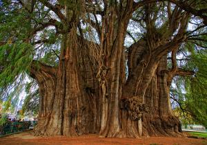 p4p -trees- bääääääääääääm1